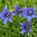 Las plantas y sus nombres botánicos
