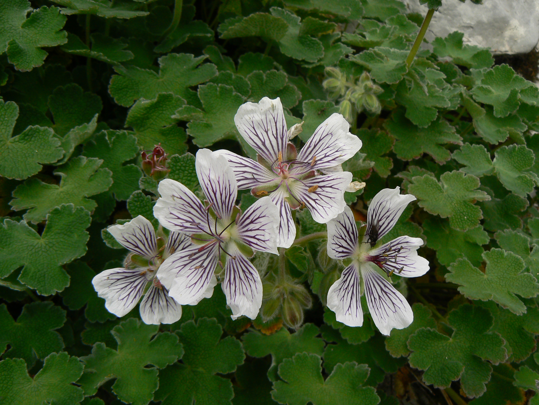 Plantas con sus nombres imagui for 5 plantas ornamentales con sus nombres