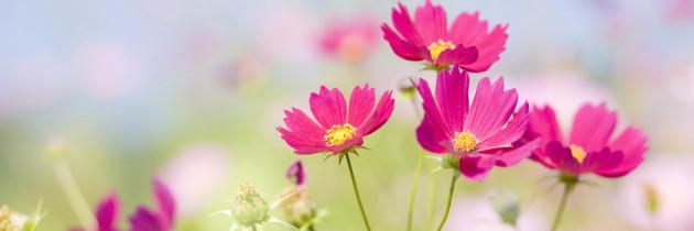 Manual de Exposiciones Florales