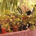 Plant Market 2016