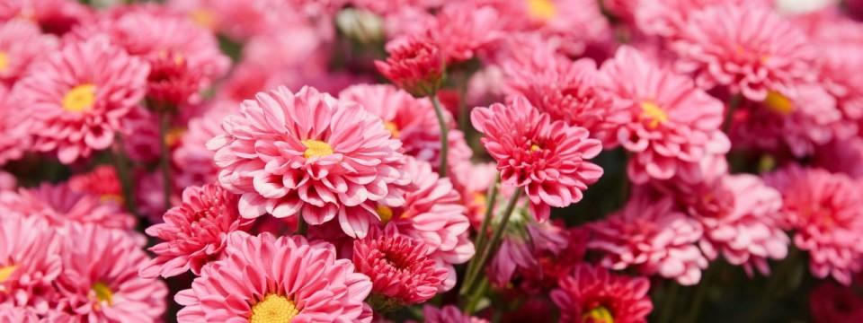 Escuela de Exposiciones de Flores